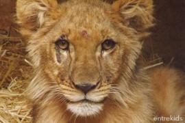 Ven al Zoológico Animals Park - Los Ángeles